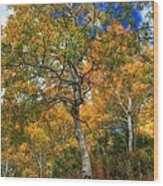 The Colors Of The Aspen Forest Wood Print