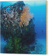 The Coral Encrusted Stern Wood Print
