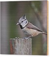 The Crested Tit Having Lunch Wood Print