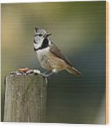 The Crested Tit Wood Print