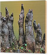 The Cypress Knees Chorus Wood Print