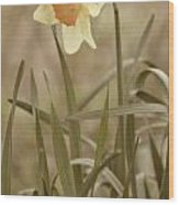 The Daffodil In Partial Sepia Wood Print