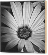The Daisy II Wood Print