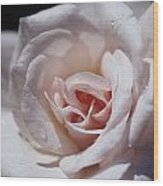 The Delicate Pale Pink Petals Wood Print