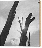 The Dragon Tree Wood Print by Artist Orange