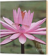 The Dragonfly And The Pink Water Lily Wood Print