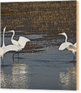 The Egrets Wood Print