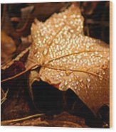 The Enlightened Maple Leaf Wood Print by LeeAnn McLaneGoetz McLaneGoetzStudioLLCcom