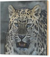 The Eyes Of A Jaguar Wood Print