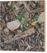 The Fallen Butterfly Wings Wood Print