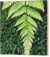 The Fern Wood Print