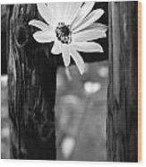 The Flower Bw Wood Print