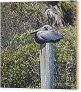 The Gatekeeper - Pelican Wood Print