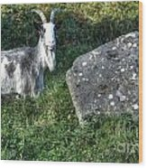 The Goat And The Stone Wood Print
