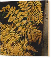 The Golden Fern Wood Print
