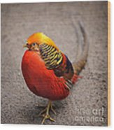 The Golden Pheasant Wood Print