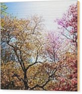The Grandest Of Dreams - Cherry Blossoms - Brooklyn Botanic Garden Wood Print