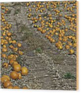 The Great Pumpkin Patch Trail Wood Print