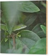 The Green Lizard Wood Print