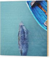 The Grey Seal Wood Print