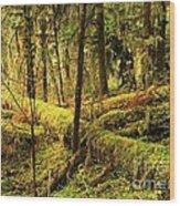 The Hall Of Mosses Wood Print