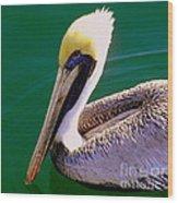 The Happy Pelican Wood Print