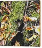 The Hiding Spot Wood Print