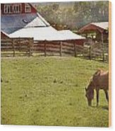 The Horse In The Barn Yard Wood Print by Kathy Jennings