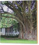 The House Beside The Banyan Tree Wood Print
