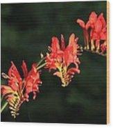 The Hydra Wood Print