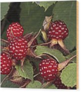 The Invasive Wine Berry And Shield Bugs Wood Print