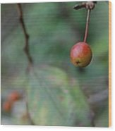 The Last Berry Wood Print by Beverly Hammond