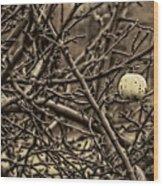 The Last Little Apple On The Tree Wood Print
