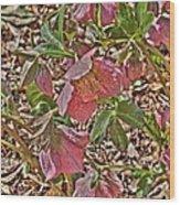 The Lenten Rose Wood Print