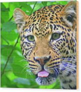 The Leopard's Tongue Wood Print