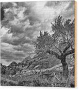 The Light On The Cottonwood Bw Wood Print