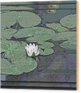 The Lily Bloom Wood Print