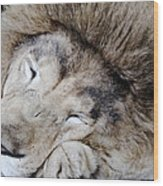The Lion Sleeps Wood Print