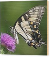 The Love Of Thistle Wood Print