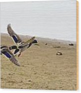 The Mallard Ducks Flight Wood Print