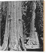 The Mariposa Grove In Yosemite Wood Print