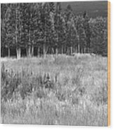 The Meadow Black And White Wood Print