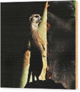 The Meerkats Perch Wood Print