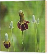 The Mexican Hat Flower Wood Print