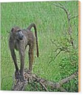 The Mighty Baboon Wood Print