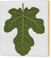 The Mission Fig Leaf Wood Print
