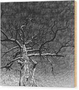 The Moon Tree Wood Print by Artist Orange