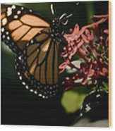 The Morning Monarch Wood Print