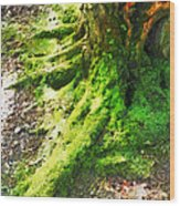 The Moss Covered Roots Wood Print