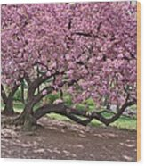 The Most Beautiful Cherry Tree Wood Print